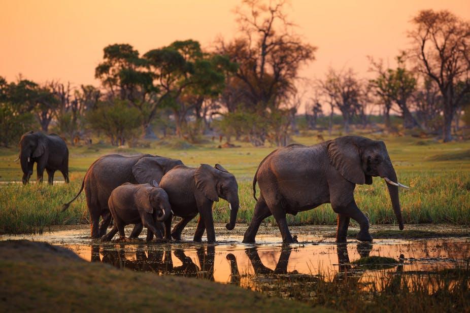 Xenia Viaggi - Destinazione Botswana